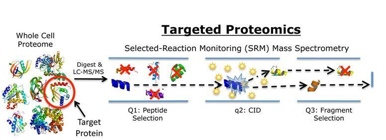 蛋白质组学 > srm/mrm技术服务